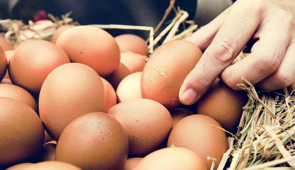 Egg Brands